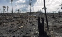 G7 pledges 22 million USD to help fight Amazon fires