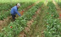 Neues Genossenschaftsmodell beim Aufbau ländlicher Gegenden