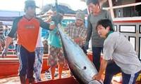 Unterstützung der Fischerei
