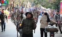 Hanoi erwartet das Jahr des Pferdes