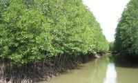 Weltbank unterstützt Vietnam beim Kampf gegen den Klimawandel