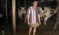 Bauern in Cu Chi sind durch die Zucht von Milchkühen reich geworden