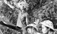 Seminar: Milizen in der Offensive während des Krieges in Vietnam