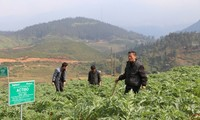 Bauern in Sapa verdienen durch Anpflanzen von Heilkräutern