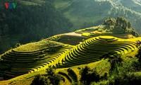 Das 3. Reis-Festival unterstützt Bauern mit Saatgut