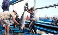 Schutz des Vorkommens der Fischerei für einen blauen Ozean