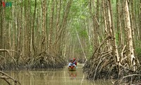 Ca Mau startet den Wettbewerb für Tourismus-Fotos