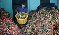 Im Juni werden Modelle zum sicheren Absatz der Agrarprodukte während der Pandemie vorgestellt