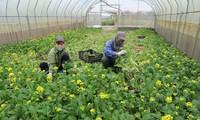 944 millions de dollars d'exportation de fruits et légumes au premier trimestre