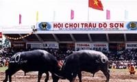 Công bố Lễ hội chọi Trâu Đồ Sơn là Di sản văn hóa phi vật thể quốc gia