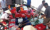 Рыбаки Вьетнама начинают первую в новом году рыбную ловлю в районе островов Чыонгша