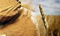Отмечается 38-я годовщина Всемирного дня продовольствия и 40-летие со дня открытия представительства ФАО во Вьетнаме