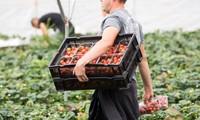 Великобритания намерена ускорить ограничение притока низкоквалифицированных работников