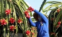 EVFTA предоставляет Бельгии и Вьетнаму возможность сотрудничества в сфере бизнеса