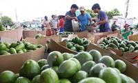 Peluang bagi hasil agribisnis Vietnam di pasar Rusia