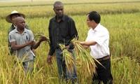 Memperkuat temu pergaulan rakyat antara Vietnam dan negara-negara Komunitas perkembangan Afrika Selatan