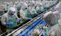 Cabang perikanan Vietnam menargetkan akan mencapai nilai ekspor sebesar 10 miliar USD.