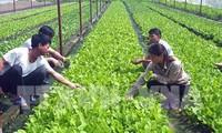 Mengubah cara produksi dalam pertanian untuk beradaptasi dengan perubahan iklim