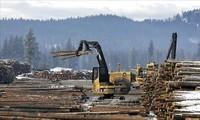 WTO mengeluarkan vonis yang sebagian mendukung Kanada dalam sengketa dengan AS tentang tarif impor terhadap produk kayu lunak