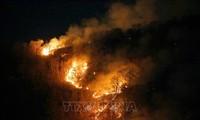 Sekjen PBB menyatakan kecemasan mendalam tentang kebakaran hutan Amazon