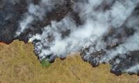 Kebakaran hutan Amazon tidak hanya merupakan masalah sendiri  dari masing-masing negara