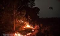 Menemukan lebih dari 2.500 titik panas kebakaran hutan di Asia Tenggara