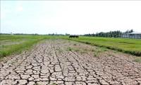 Memberikan bantuan keuangan sebesar 530 miliar VND kepada 8 provinsi Daerah Dataran Rendah Sungai Mekong untuk mencegah dan menanggulangi kekeringan dan salinisasi