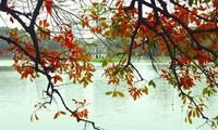 Melodi-melodi tentang Musim gugur Kota Ha Noi.