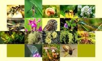 KTT Biodiversitas PBB Tetapkan Kebijakan Dalam Melindungi Alam