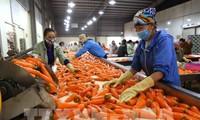 Perkuat Sosialisasi Hasil Pertanian Obatan Vietnam ke Australia