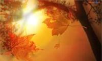 Musim Gugur untuk Adinda
