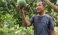 Nguyen Quang Toan -  Prajurit Penyandang Disabilitas Teladan yang Bantu Warga Dalam  Produksi Pertanian