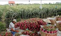 Agriculture : coopération Vietnam-Australie