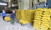 Vietnam berorientasi ke target ekspor beras yang berkesinambungan