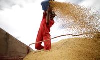 Tiongkok sementara menghentikan pembelian hasil pertanian AS