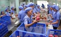Surplus  perdagangan hasil pertanian, kehutanan dan perikanan Vietnam mencapai lebih dari 6 miliar USD