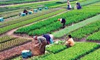 Membangun ekonomi kolektif yang kuat untuk mengembangkan perekonomian