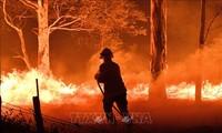 Australia memperkuat pemadaman kebakaran untuk menanggulangi kebakaran hutan