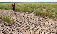 UNDP memberikan bantuan sebesar 185.000 USD kepada provinsi-provinsi yang terkena dampak  kekeringan dan keasinan