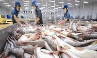 Tarif anti-dumping terhadap ikan patin dari Vietnam ke AS turun