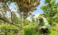 Daya hidup baru di Hutan U Minh Ha