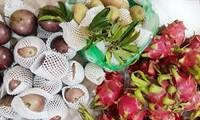Nilai ekspor hortikultura mencapai hampir 2 miliar USD