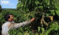 Para petani Provinsi Dak Lak menaruh kepercayaannya pada Konferensi Wicara dengan PM