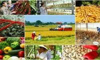 Perkenalan Sepintas tentang Tiktok Vietnam dan Situasi Manajemen Masalah-Masalah Pedesaan Vietnam