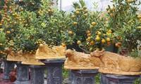 Penanam  Pohon Persik dan Pohon Jeruk Imlek Sibuk pada Hari Raya Tet 2021
