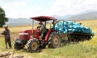 Musim Cukup Pangan di Persawahan Kabupaten Lak