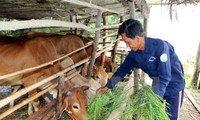 Vietnam engagiert sich für die nachhaltige Armutsminderung
