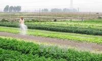 Vietnamesische Landwirtschaft profitiert vom TPP-Abkommen