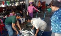 Erhöhung des Exportvolumens der Meeresfrüchte