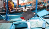Fischer in Khanh Hoa fahren lebhaft auf das Meer hinaus